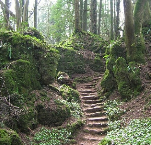 Puzzlewood in the Forest of Dean